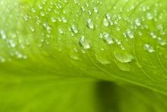 Wet Green Leaves in a Garden Royalty Free Stock Photos