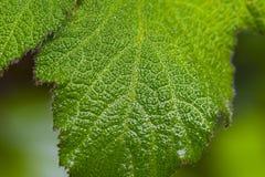 Wet green leaves. Macro shot on wet green leaves Royalty Free Stock Photo