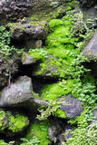 The wet green moss on dark rocks royalty free stock photos