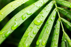 Wet Green Palm Leaves Stock Image