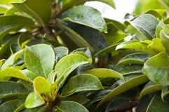 Wet green plants closeup Royalty Free Stock Image