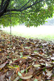 Wet ground covered by yellow leaf. And green leaf Royalty Free Stock Photography