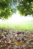 Wet ground covered by yellow leaf. And green leaf Stock Photo