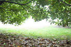 Wet ground covered by yellow leaf. And green leaf Royalty Free Stock Images