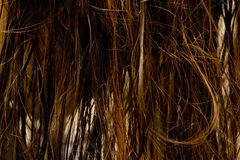 Wet hair. A woman with wet hair Stock Photos