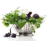 Wet herbs in colander Stock Photography