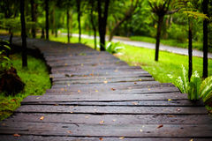 Wet hiking path in tropical park Stock Photography