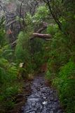Wet hiking trail in a tropical forest. Portuguese island of Madeira royalty free stock photos