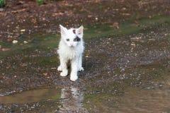 Wet homeless sad kitten on a street after a rain royalty free stock photo
