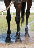 Wet horse feet in the sparks of water Royalty Free Stock Image