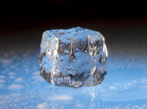 Wet ice cube on blue. Single ice cube wet with moisture bottom lit by blue light Royalty Free Stock Photo