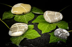 Wet ivy leaves and pebble stones Royalty Free Stock Image