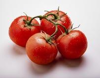 Wet Juicy Tomatoes on the Vine stock photo