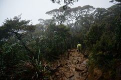Wet jungle hike. Hike on trail through jungle on wet day Stock Photography