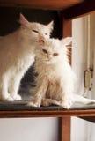 Wet kitten Royalty Free Stock Images