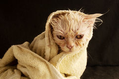 Wet kitten Stock Photos