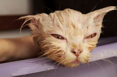 Wet kitty Stock Image