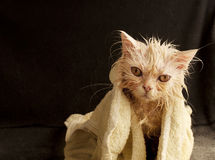 Wet kitty Stock Photos
