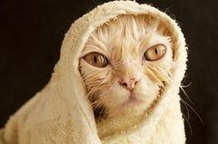 Wet kitty Stock Photos