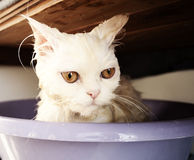 Wet kitty Stock Photo