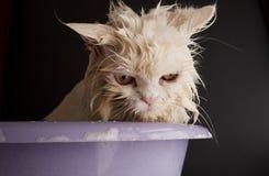 Wet kitty Stock Image