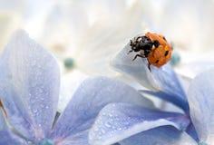 Wet Ladybug Stock Photo