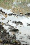 Wet land Stock Photography