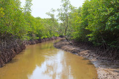 Wet land ana tidal water area  of mangrove forest in pranburi na Royalty Free Stock Photos