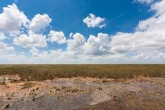 Wet Land, Everglades, FL Royalty Free Stock Image