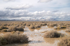 Wet land in Nevada Royalty Free Stock Photos