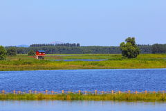 Wet land. Pretty view of wet land Royalty Free Stock Photo