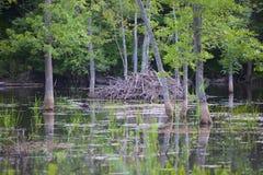 Wet Lands Stock Photo