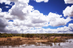 Wet Lands. Marshy wetlands, small trees and big white fluffy clouds Royalty Free Stock Image