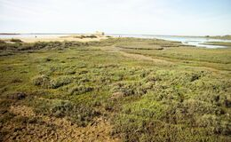 Free Wet Lands Near The Ria In Fuseta, Algarve - Portugal Royalty Free Stock Photography - 215846607
