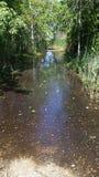 Wet lands Stock Photos