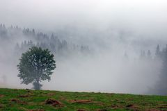 Wet Landscape With Lonely Tree in Fog Stock Photos