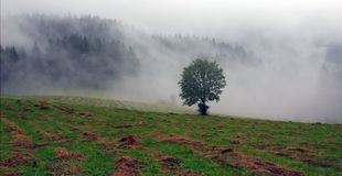 Wet Landscape With Lonely Tree in Fog Royalty Free Stock Photo