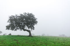 Wet Landscape With Lonely Tree in Morning Fog Stock Image