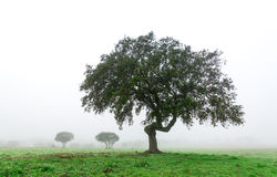 Wet Landscape With Lonely Tree in Morning Fog Royalty Free Stock Image