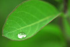 Wet leaf. Green leaf with water drops Royalty Free Stock Photography