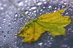 Wet Leaf. Leaf on glass with water droplets Royalty Free Stock Photos