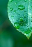 Wet leaf stock image