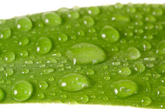 Wet leaf Stock Photos