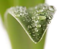 Wet leaf royalty free stock image