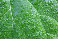 Wet leaf Royalty Free Stock Image