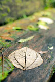 Wet leaf on a bench Royalty Free Stock Image