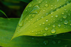 Wet leaf close up Stock Photography