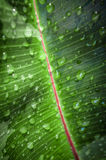 Wet Leaf Stock Image