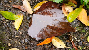 Wet leaf. On ground Royalty Free Stock Images