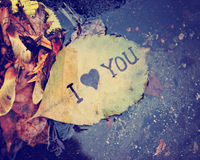 A wet leaf in a gutter that reads i love you Stock Images